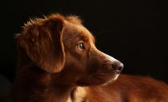 В Норвегии собаки массово гибнут от неизвестной болезни. Может ли она быть опасной для людей?