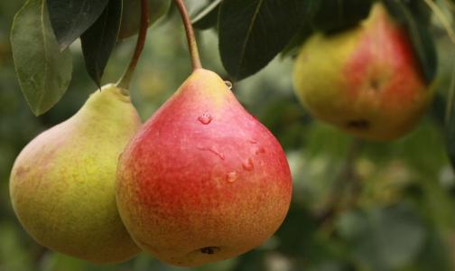 Диетолог назвал самый полезный фрукт для здоровья кишечника