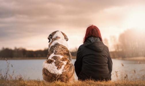 Роспотребнадзор напомнил об опасном заболевании, передающемся от собак