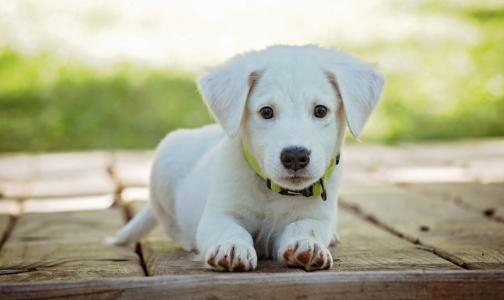 В Роспотребнадзоре объяснили, может ли коронавирус передаваться через домашних животных