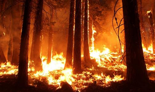 Ученые: Прошлогодние лесные пожары способствуют распространению эпидемии коронавируса