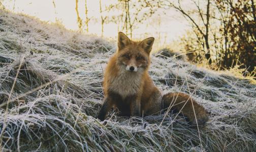 Роспотребнадзор: С начала года животные покусали более четырех тысяч петербуржцев