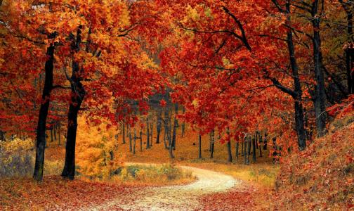 Терапевт посоветовала осенью не гулять часто в парках и не увлекаться сладким