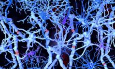 Ученые СПбГУ: Нервные клетки восстанавливаются даже после серьезных травм позвоночника