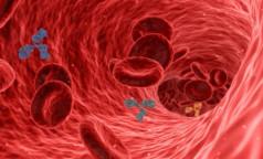 Геннадий Онищенко оценил феномен «неправильных» антител к COVID-19