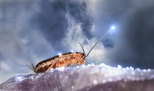 Чтобы не отравиться вместе с тараканами. Роспотребнадзор оценил средства, которые используются для борьбы с насекомыми