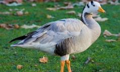 В Индии обнаружили мертвыми почти 2 тысячи птиц - власти подозревают вспышку птичьего гриппа