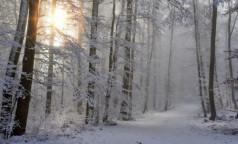 В банных тапочках по лесу. За праздники врачи НИИ скорой помощи спасли 20 жертв обморожений
