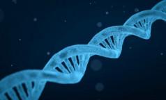 """Новый мутант. """"Японский"""" штамм коронавируса может быть более устойчив к вакцинам"""