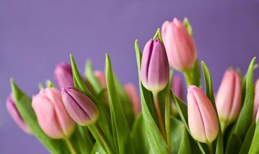 Какие цветы  лучше не дарить на 8 марта, посоветовал врач