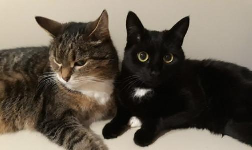 Российские ученые: Если кошка заразится коронавирусом, она не сможет передать его человеку
