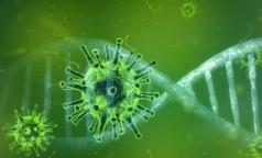 Северо-западный штамм коронавируса нашли у петербуржца. Опасен ли он для переболевших и привитых, рассказали ученые
