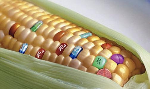 ГМО: единого мнения нет