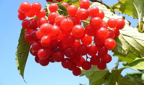 Осенний витаминопад