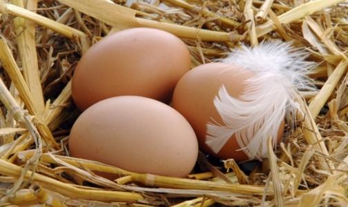 Онищенко разрешил есть яйца