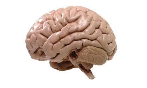 Ученые считают: душа человека прячется в мозге