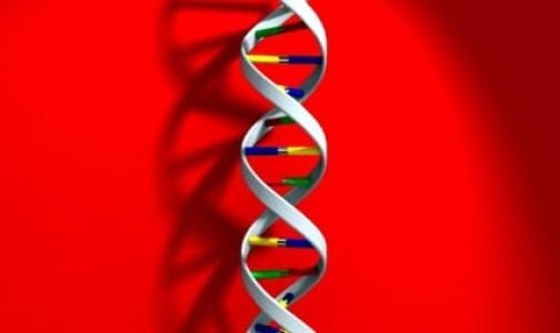 Риск отторжения определят по донорской ДНК