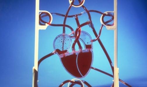 В центре Алмазова исследуют возможности стволовых клеток