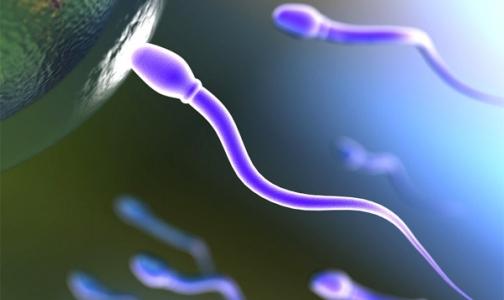 Японские ученые вырастили искусственные сперматозоиды!