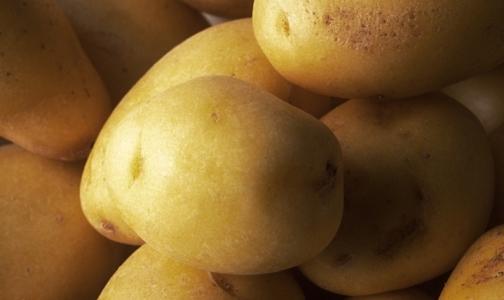 Россельхознадзор вводит запрет на поставку в РФ картофеля из Египта