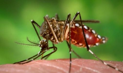 В Таиланде испытывают первую в мире вакцину от лихорадки денге
