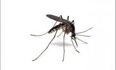 Всем лето хорошо, только не комарами