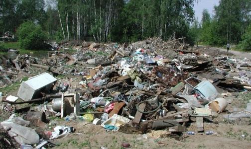 В Петербурге обнаружили новые несанкционированные свалки