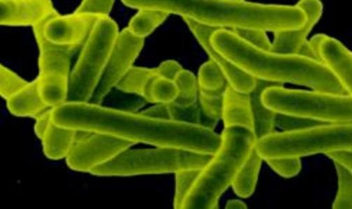 В Финляндии зафиксирован случай заражения бактерией EHEC
