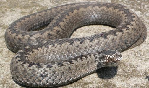 Как выжить после укуса змеи
