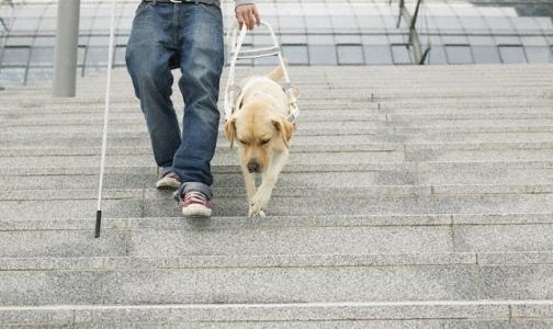 Собакам-поводырям увеличат социальное пособие