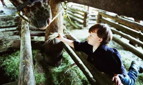 Питерских малышей лошади учат ходить, говорить и улыбаться