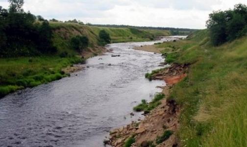 В реку Тосна попали неизвестные химикаты