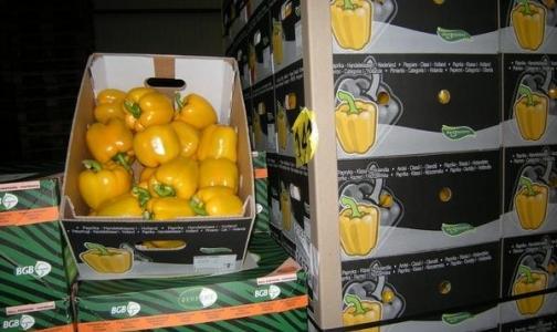 Запрет на ввоз европейских овощей поддержало большинство россиян