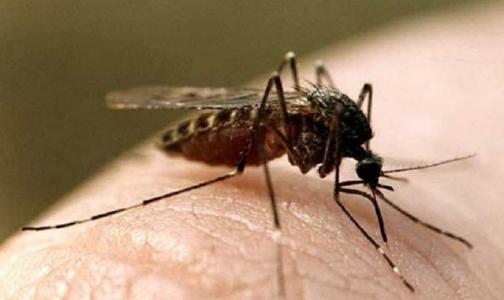 Малярию в Петербург везут не из Таджикистана, а из Индии и Южной Америки