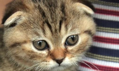 В Кировском районе работает бесплатный ветеринарный пункт