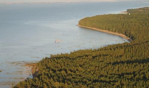 У берега Финского залива плавает порох