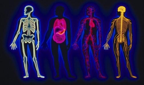 Чудеса человеческого организма