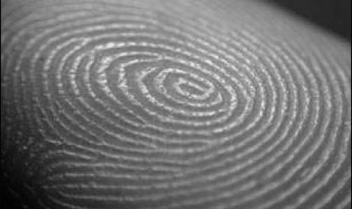 Исследователи выяснили, зачем нужны узоры на пальцах