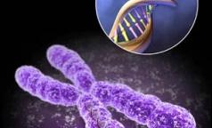 Какими редкими генетическими заболеваниями страдают петербуржцы