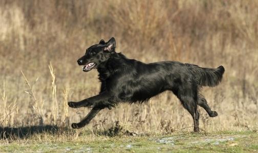 Онищенко обязал регионы зарегистрировать и привить каждую собаку