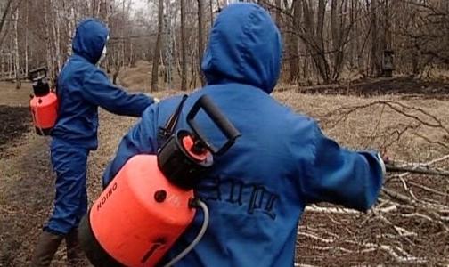 Роспотребнадзор не информировал жителей Приморского района о клещах
