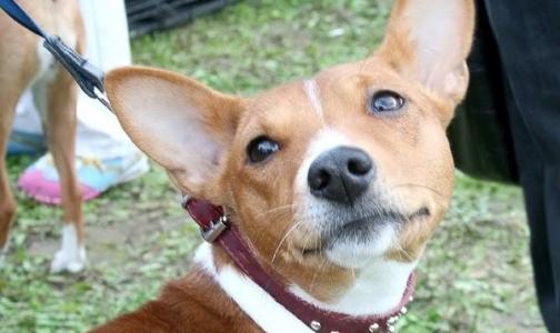 Петербургских детей лечат собаки