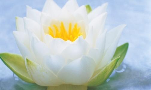 Картинка цветок белый