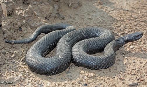 В этом году от укусов змей пострадали уже двое