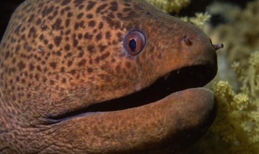 Онищенко обнаружил рыб, облученных радиацией «Фукусимы»