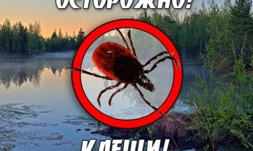 В каких регионах, близких к Петербургу, клещи кусают чаще
