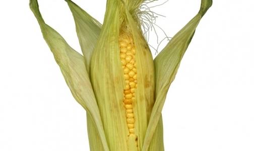 Роспотребнадзор запретил ввоз генетически модифицированной кукурузы