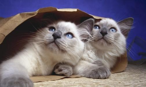 Изображения котят и щенят заметно повышают производительность труда