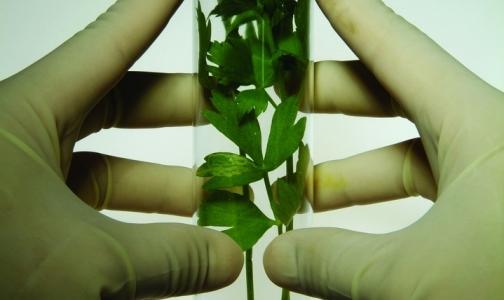 lekarstvo-ot-glistov-travi