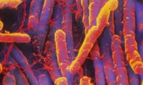 Пересадка кала оказалась в четыре раза эффективнее антибиотика